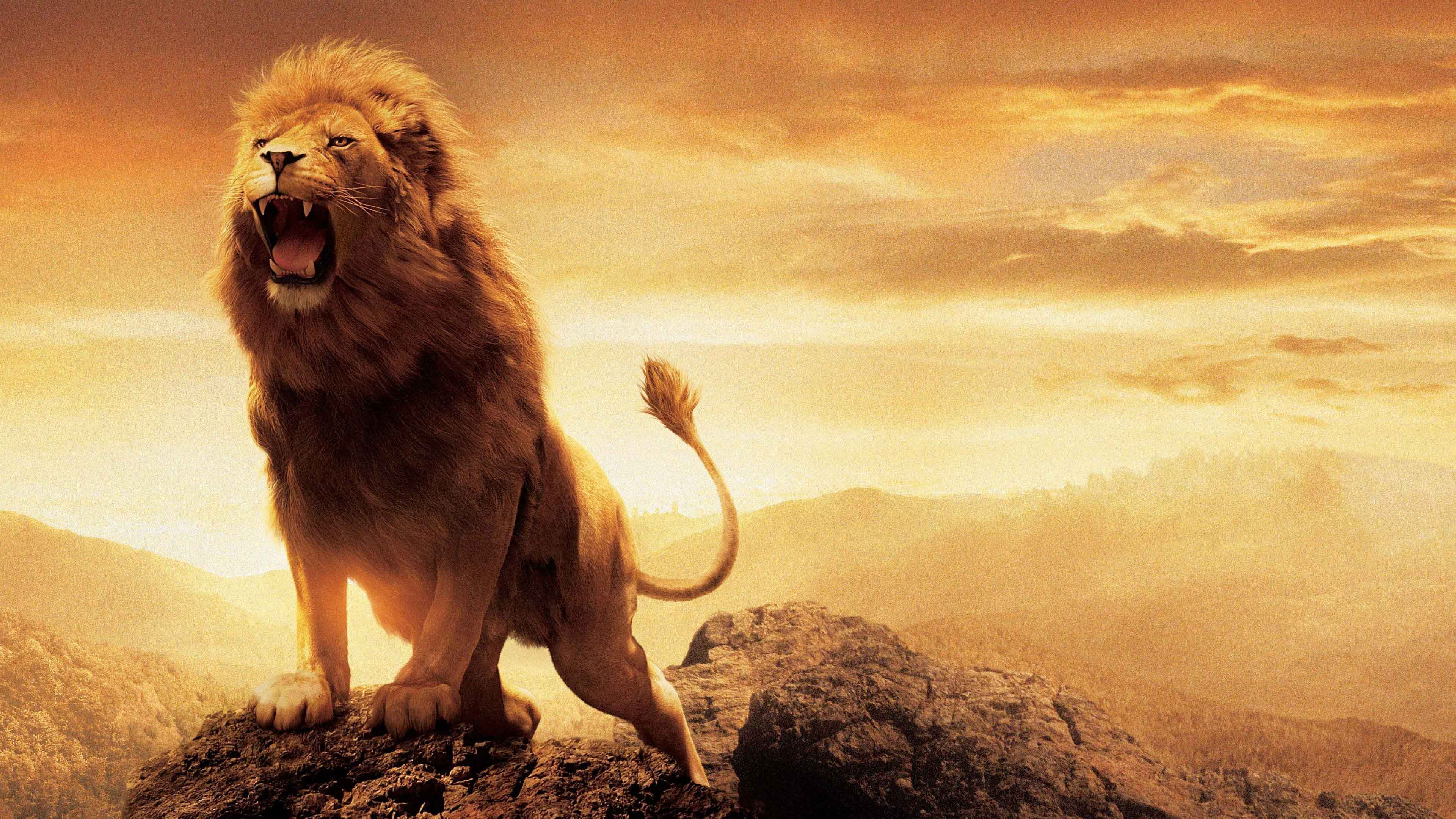 Rüyada aslan görmek 1