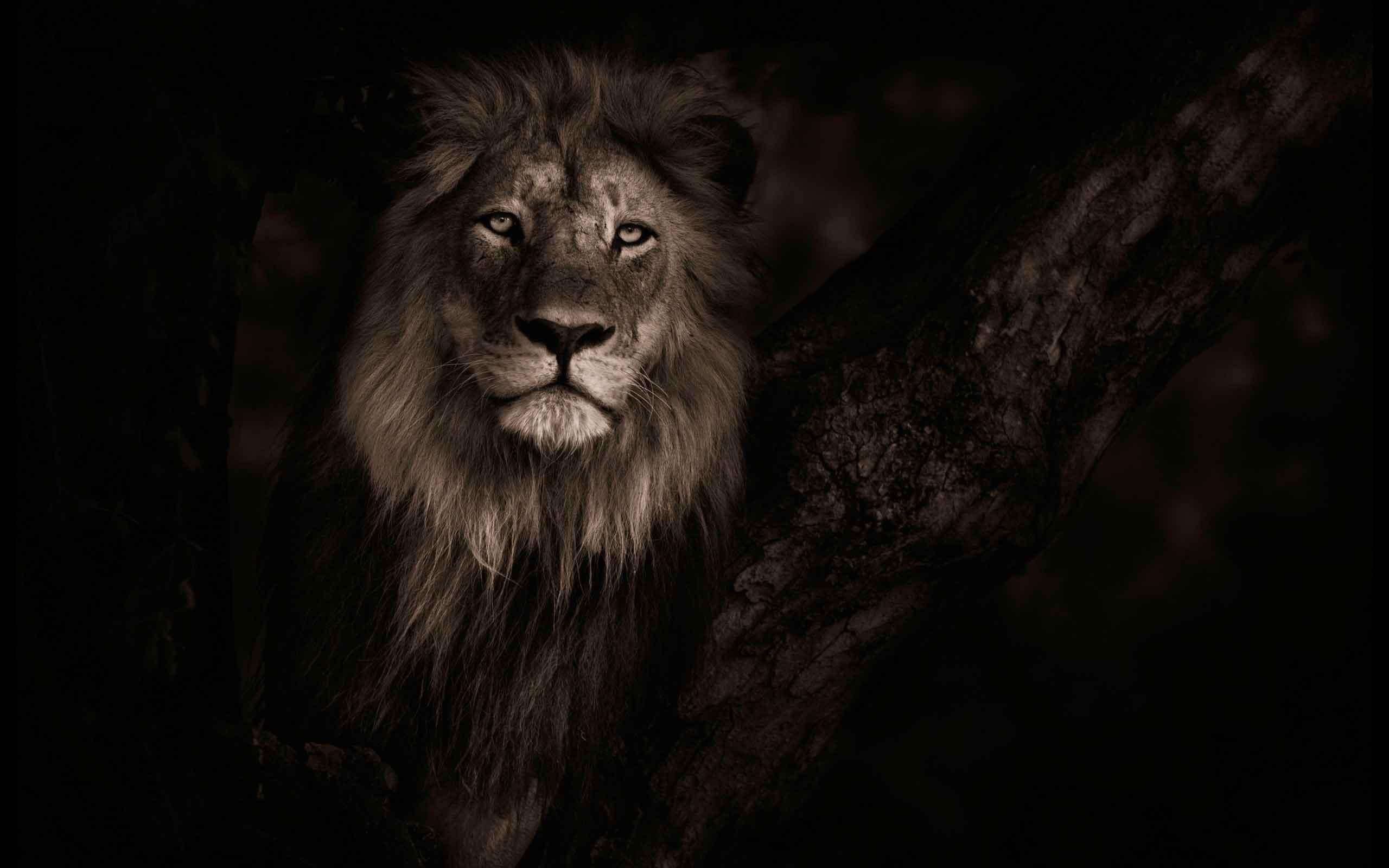 Rüyada aslan görmek 4