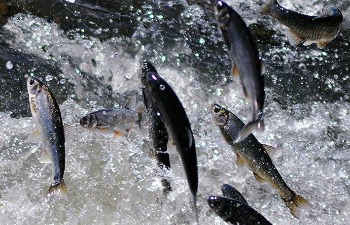 Rüyada Suda Atlayan Balıklar Görmek