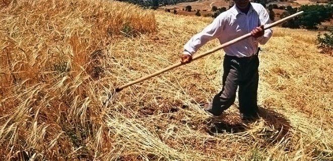 Rüyada Buğday Topladığını Görmek