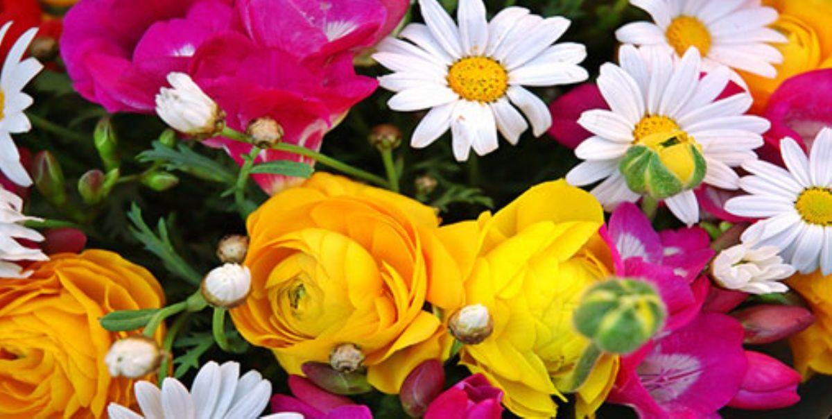 Rüyada Rengarek Çiçek Görmek
