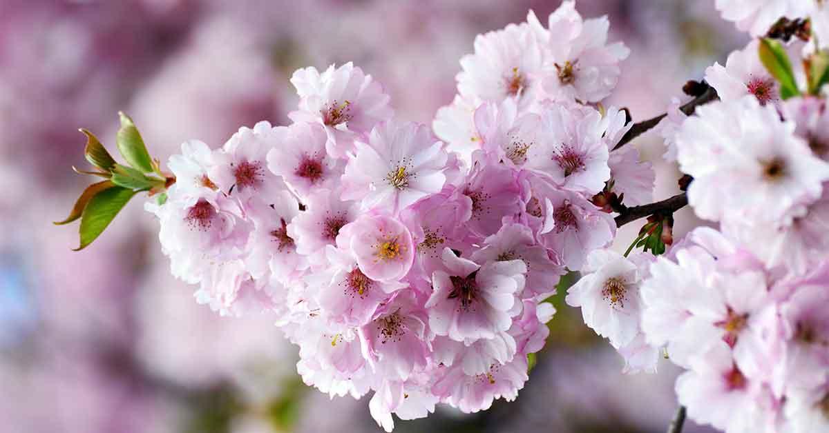 Rüyada Çiçeklerin Açtığını Görmek