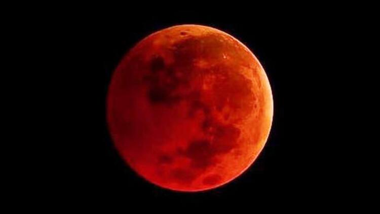 Rüyanızda Ayı Farklı Renklerde Görmek