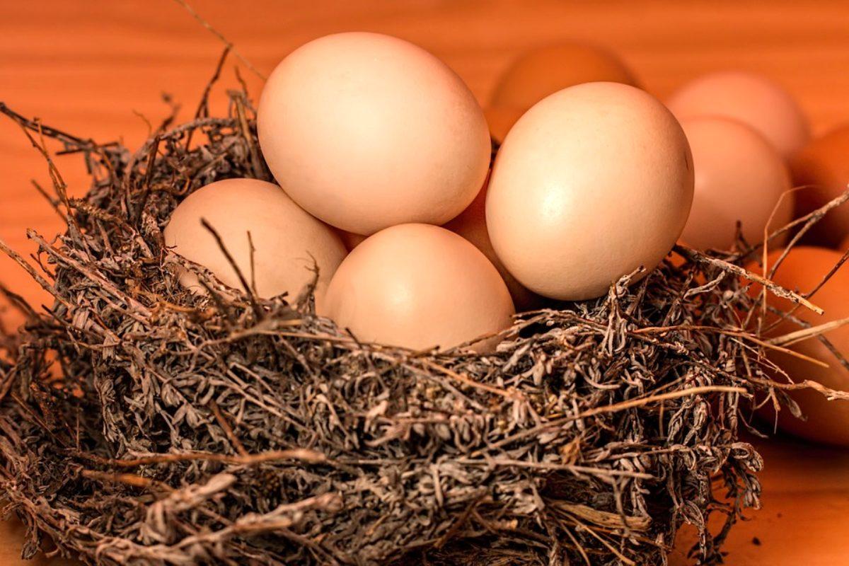 Rüyada Yumurta Yuvası Görmek