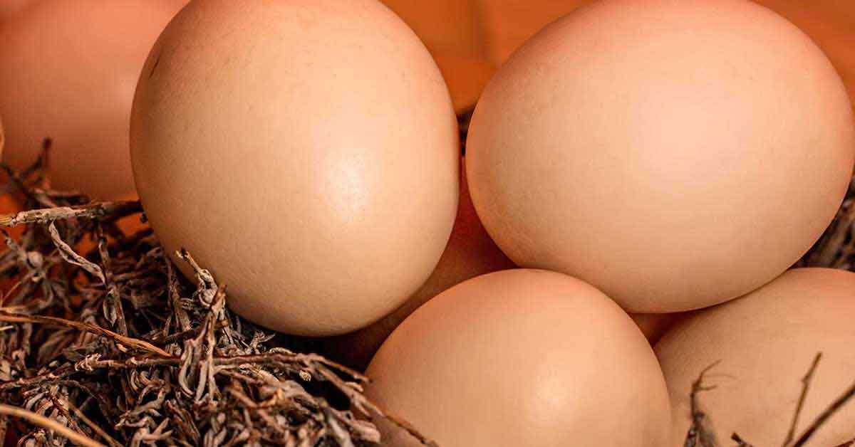 Rüyada 5 Yumurta Görmek 3