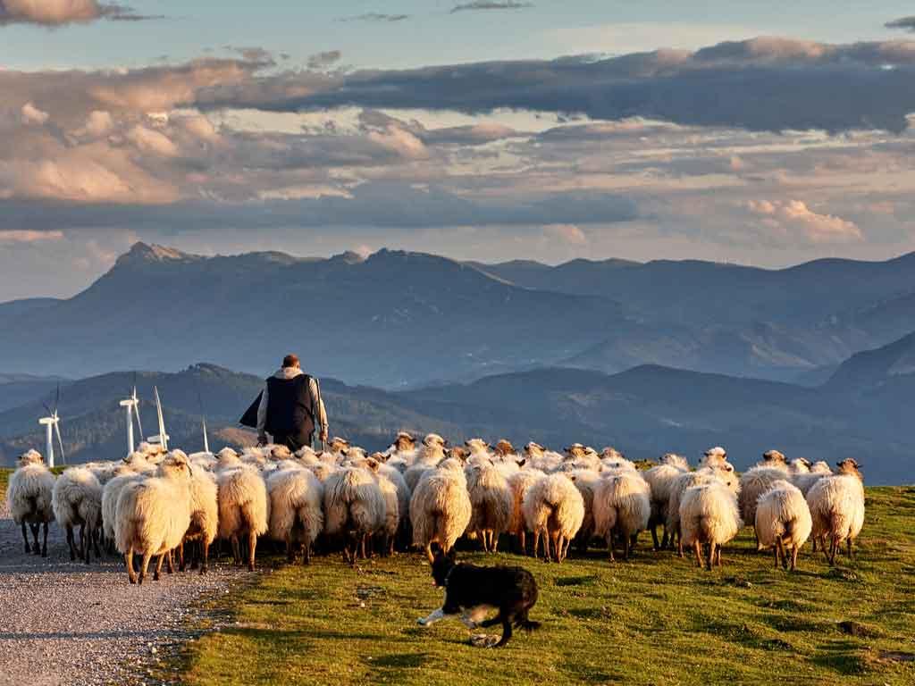 Rüyada 6 Koyun Görmek 5