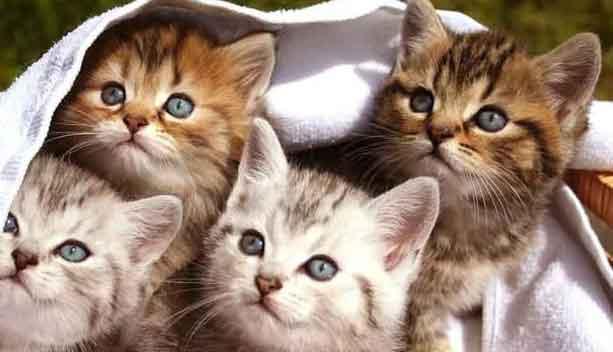 Rüyada 4 Kedi Görmek 1