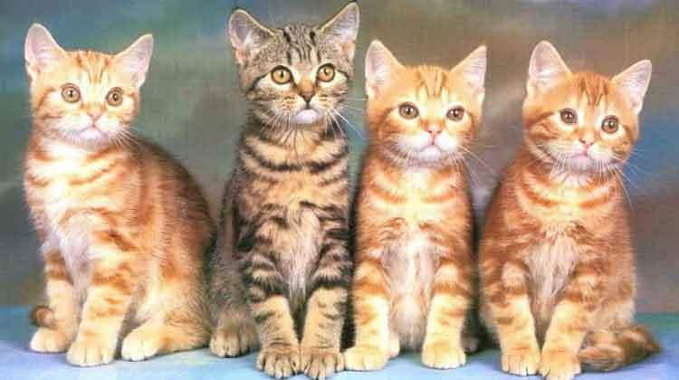 Rüyada 4 Kedi Görmek 2