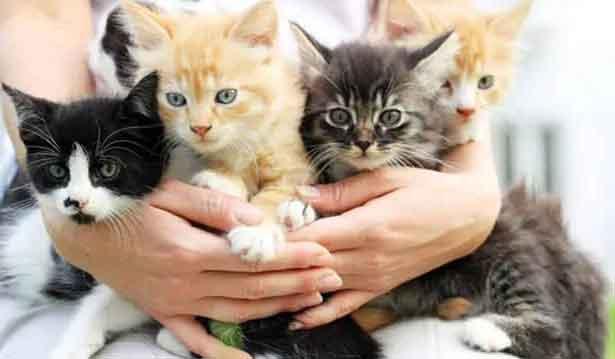 Rüyada 4 Kedi Görmek 3