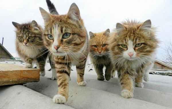 Rüyada 4 Kedi Görmek 4
