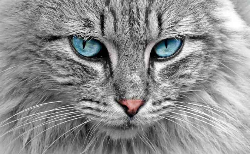 Rüyada 3 Kedi Görmek 2