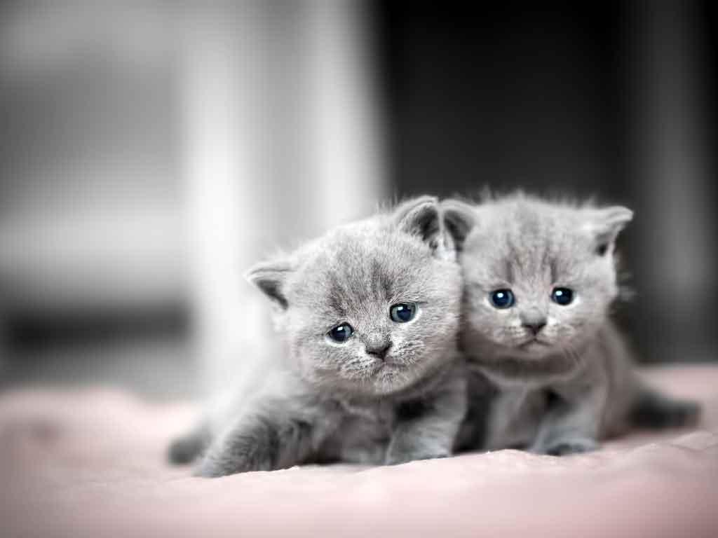 Rüyada 3 Kedi Görmek 3