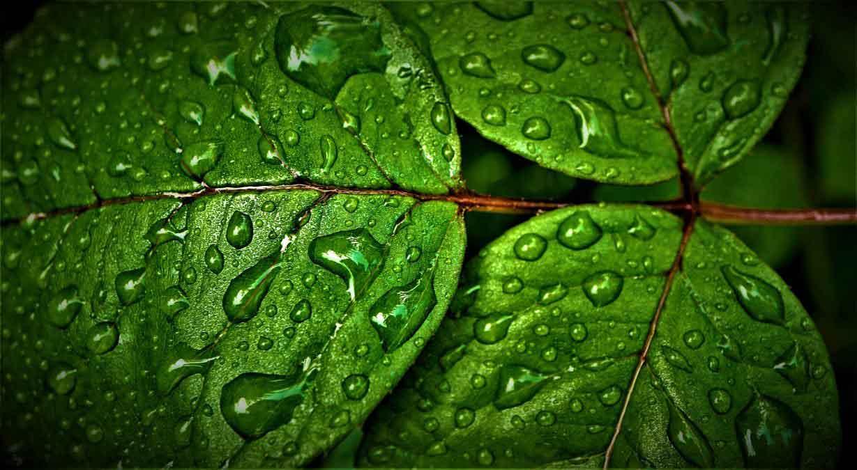 Rüyada Yağmur Görmek 3
